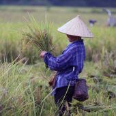 Különleges körutak júliusban és augusztusban: Nyári kalandozások Vietnamban nagy körút